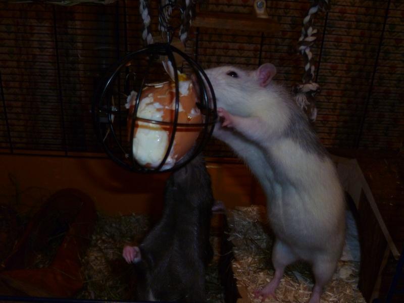 Ma joyeuse bande de petits hobbits joufflus (et poilus !) P1070713