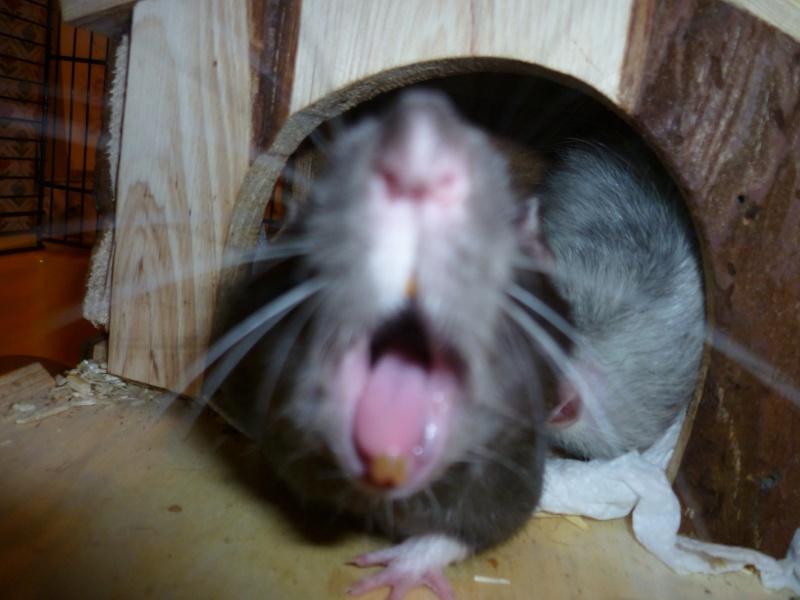 Ma joyeuse bande de petits hobbits joufflus (et poilus !) P1070721
