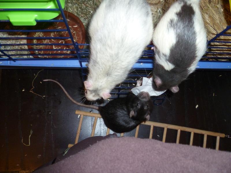 Ma joyeuse bande de petits hobbits joufflus (et poilus !) P1080215