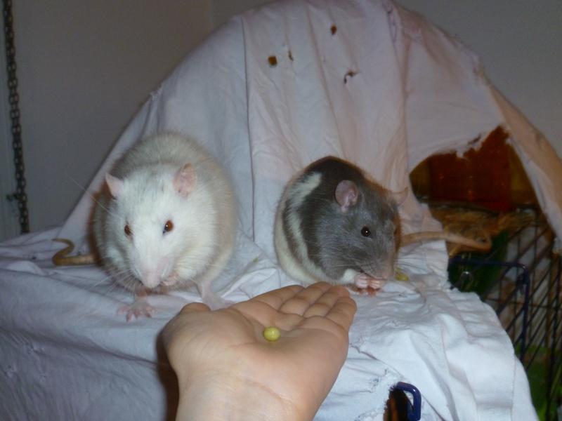 Ma joyeuse bande de petits hobbits joufflus (et poilus !) P1080710