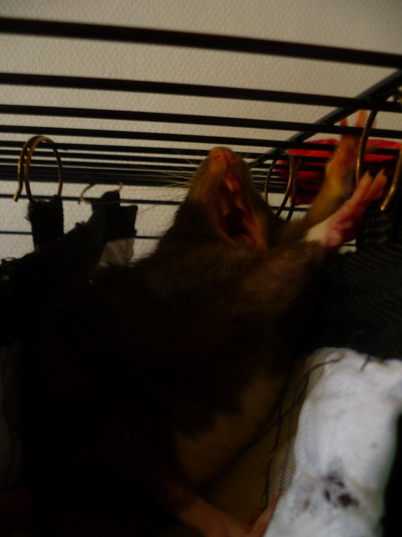 Ma joyeuse bande de petits hobbits joufflus (et poilus !) P1080910