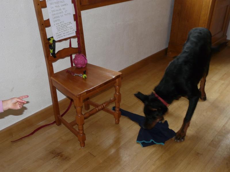 Dog Shaming.com: les chiens de la honte P1790910