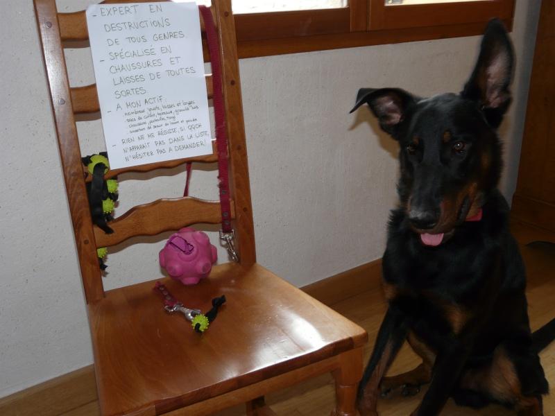 Dog Shaming.com: les chiens de la honte P1790911