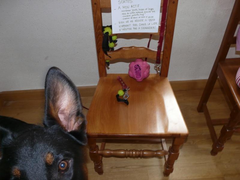 Dog Shaming.com: les chiens de la honte P1790913
