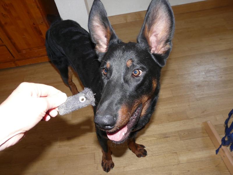 Dog Shaming.com: les chiens de la honte - Page 2 P1800017