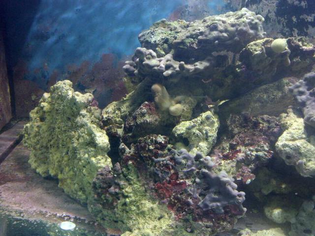 Je me lance dans le marin avec un Red Sea 250 - Page 2 Img-2012