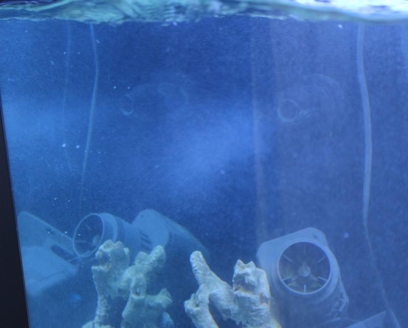Je me lance dans le marin avec un Red Sea 250 - Page 2 Img_6212