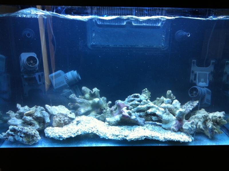 Je me lance dans le marin avec un Red Sea 250 - Page 2 Photo_10