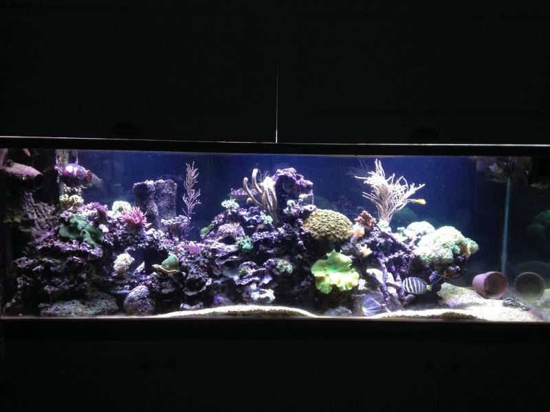 aquarium 800L Adrien - Page 9 Photo_51