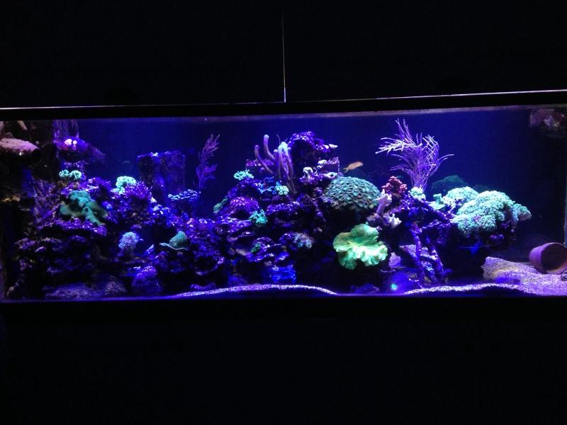 aquarium 800L Adrien - Page 9 Photo_52