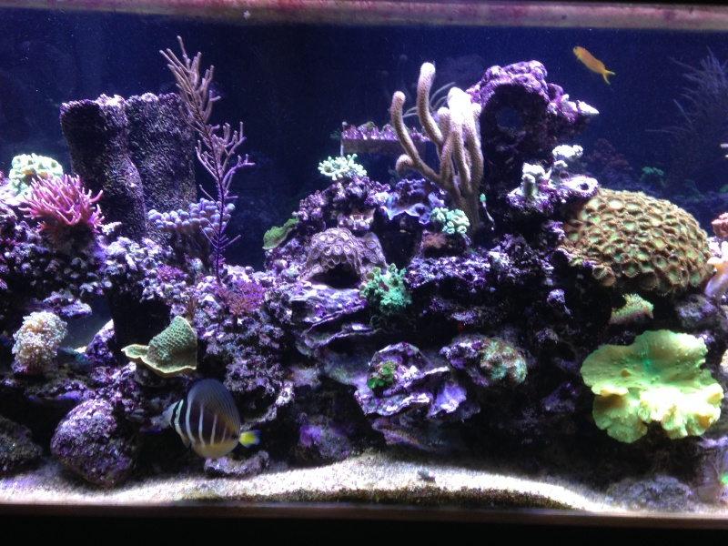 aquarium 800L Adrien - Page 9 Photo_54