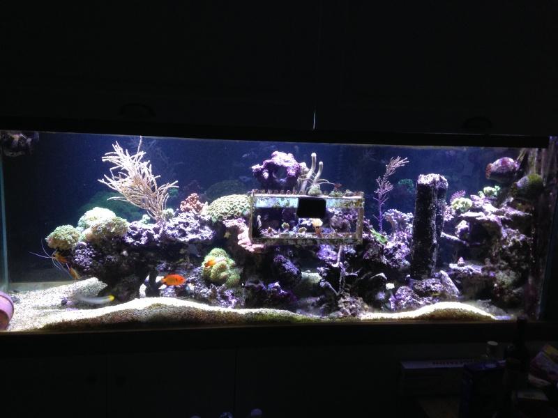 aquarium 800L Adrien - Page 9 Photo_56