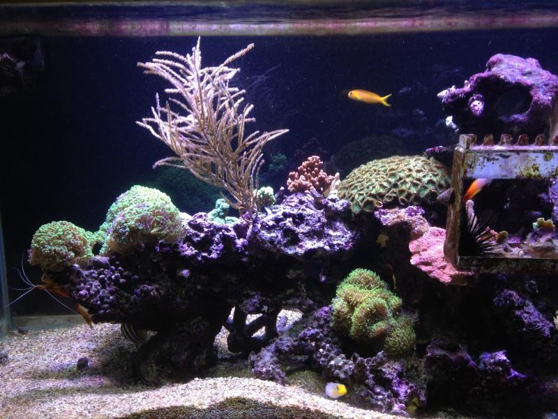 aquarium 800L Adrien - Page 9 Photo_57