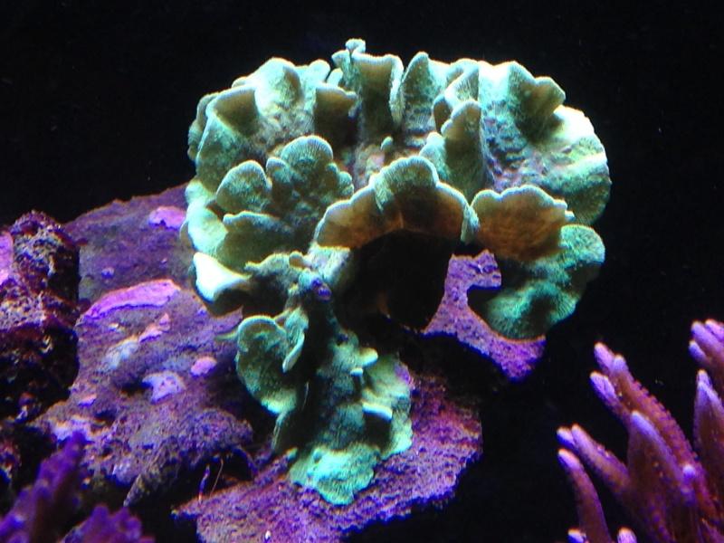 aquarium 800L Adrien - Page 9 Photo_58