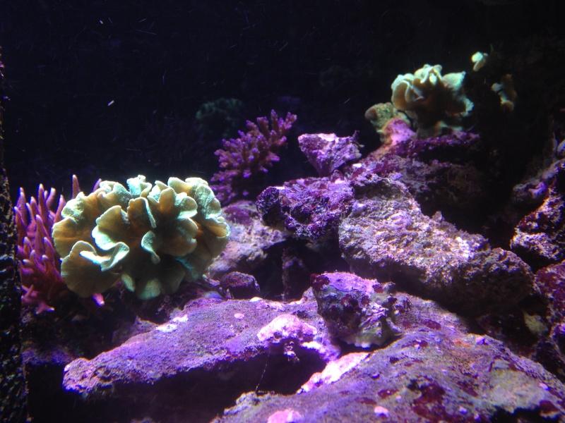 aquarium 800L Adrien - Page 9 Photo_62