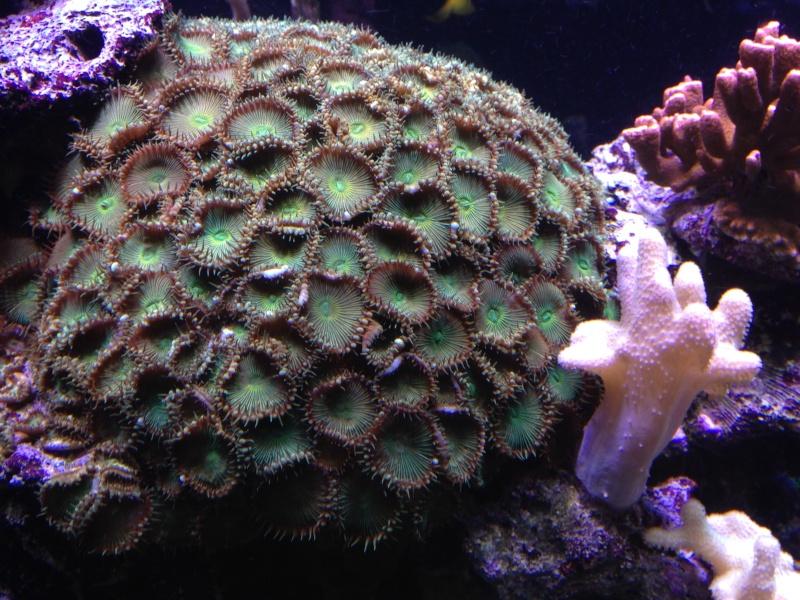 aquarium 800L Adrien - Page 9 Photo_65