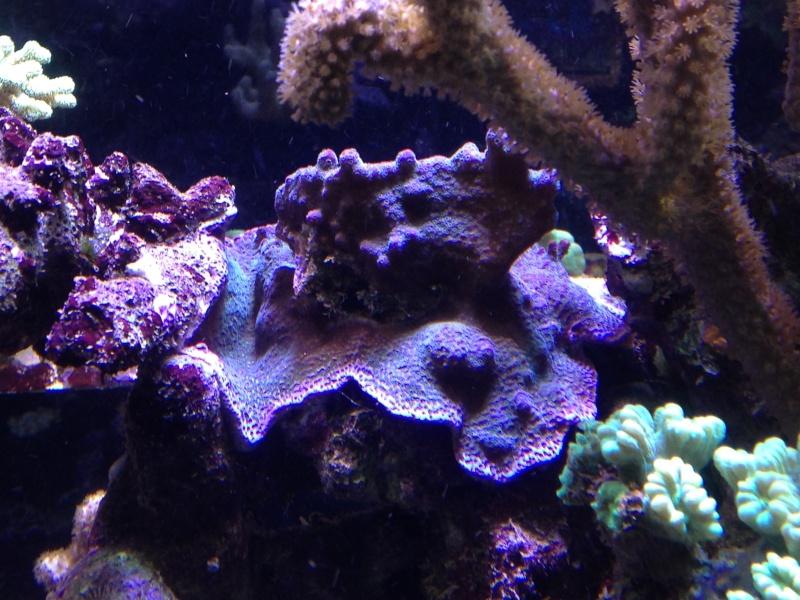 aquarium 800L Adrien - Page 9 Photo_71