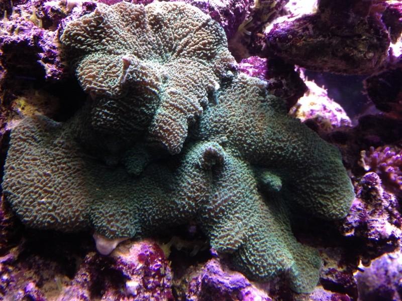 aquarium 800L Adrien - Page 9 Photo_74