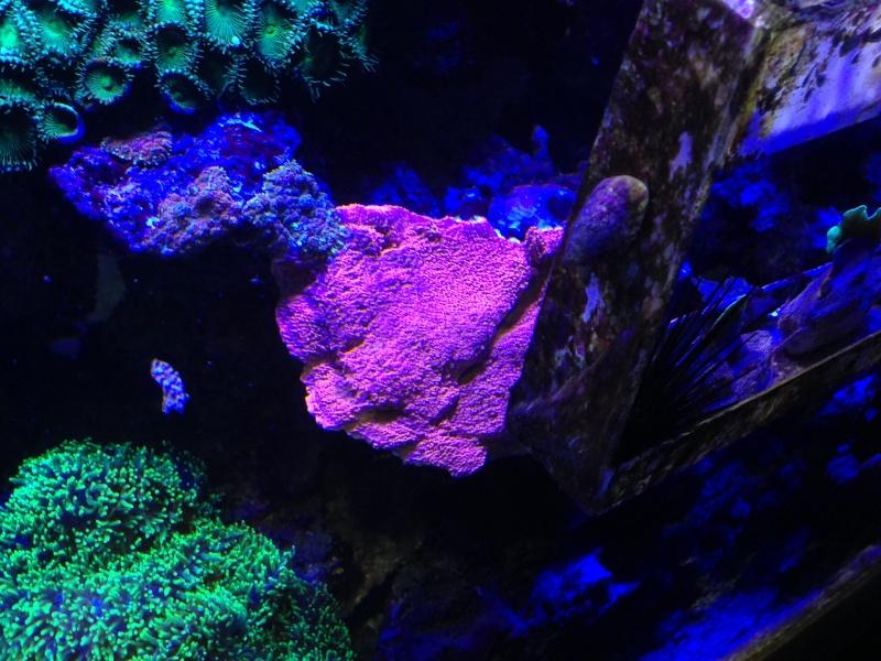 aquarium 800L Adrien - Page 9 Photo_79