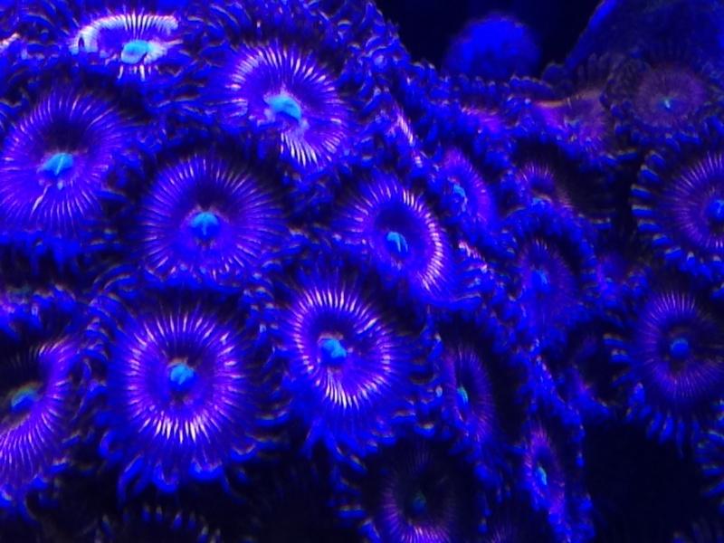 aquarium 800L Adrien - Page 9 Photo_83