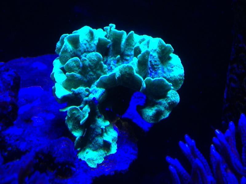 aquarium 800L Adrien - Page 9 Photo_85