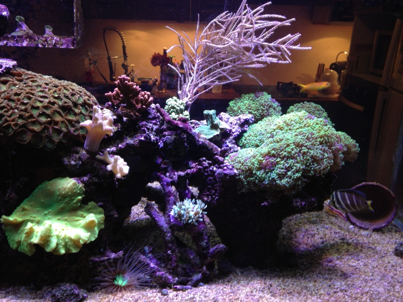aquarium 800L Adrien - Page 9 Photo_88