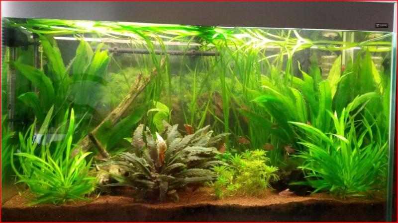 Mon premier aquarium - Page 3 Aquari10