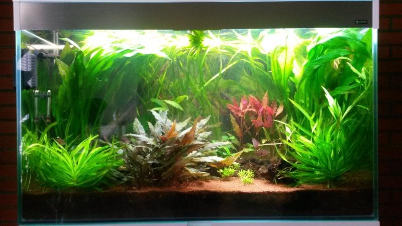 Mon premier aquarium - Page 3 Plan_d10
