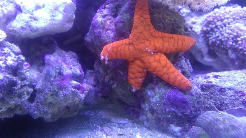 etoile de mer Img_2055