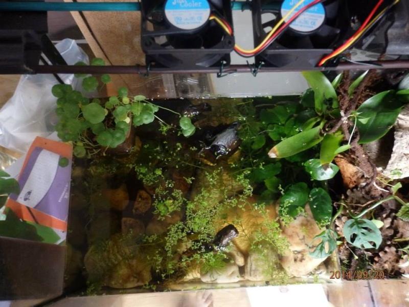 Aquaterrarium  10610510