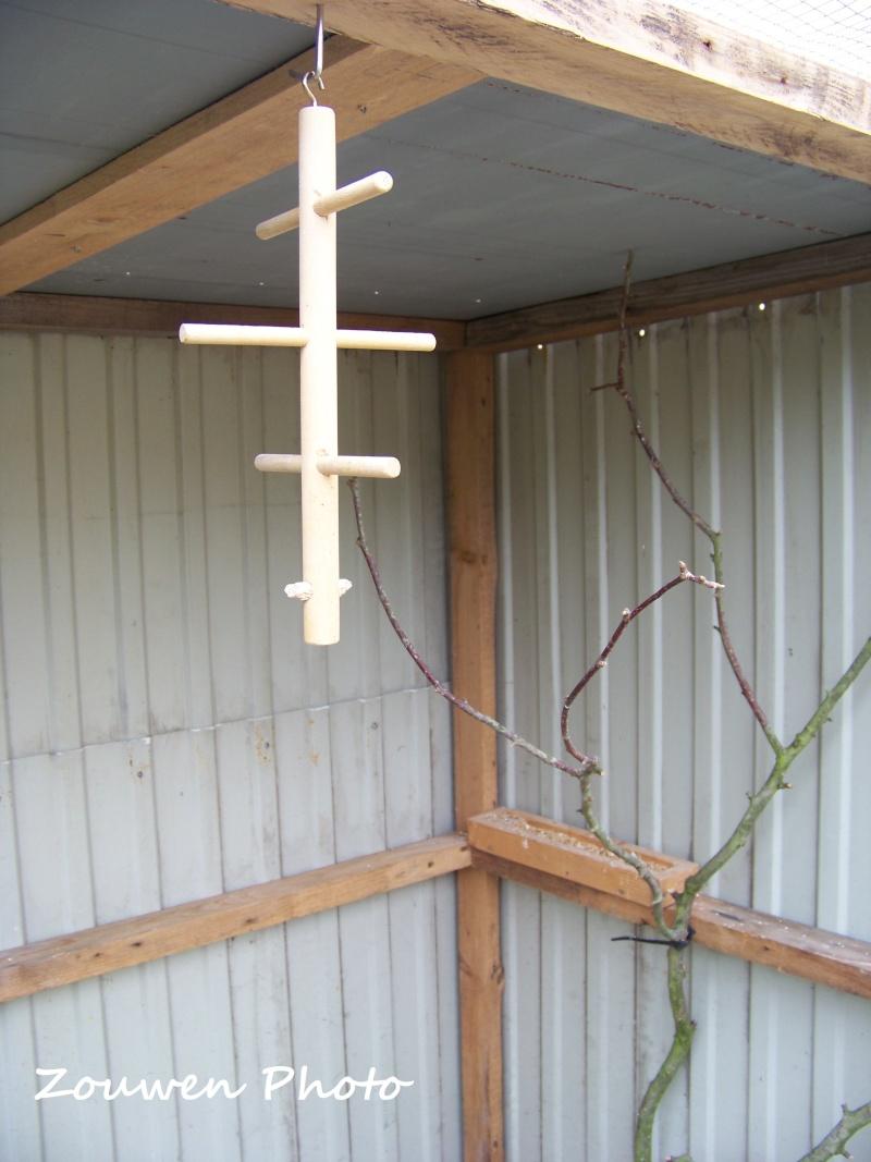 Mes perruches ondulées 100_2723