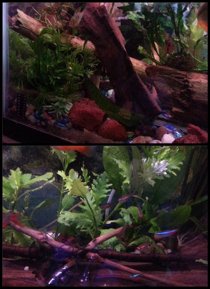 planted tank 29 gallon 2014-110