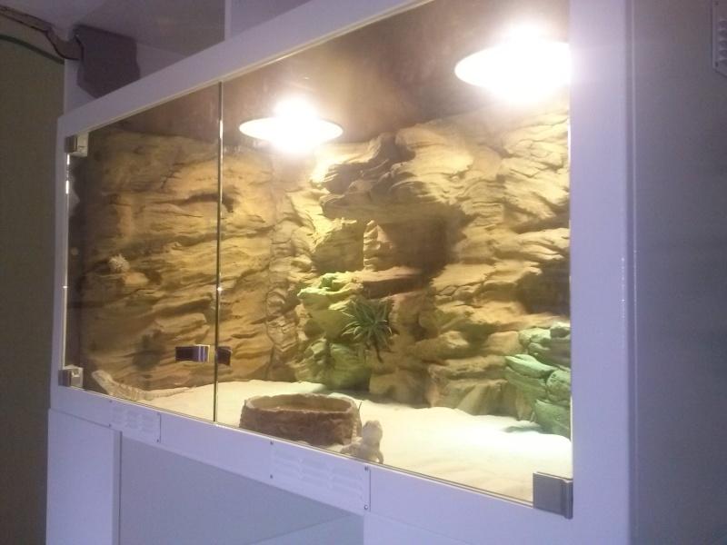 """""""  A vendre   """" Construction d'un terrarium + son meuble en MDF pour pogona henrylawsoni """" projet achevé  ! """" Cam00814"""