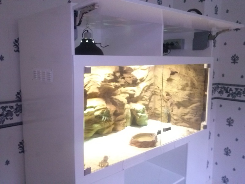 """""""  A vendre   """" Construction d'un terrarium + son meuble en MDF pour pogona henrylawsoni """" projet achevé  ! """" Cam00815"""