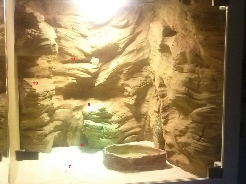 """""""  A vendre   """" Construction d'un terrarium + son meuble en MDF pour pogona henrylawsoni """" projet achevé  ! """" Terrar13"""
