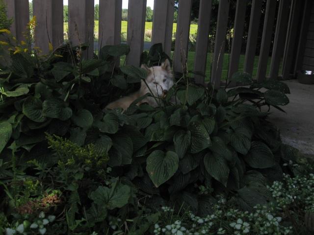 Leo's first garden Img_0052
