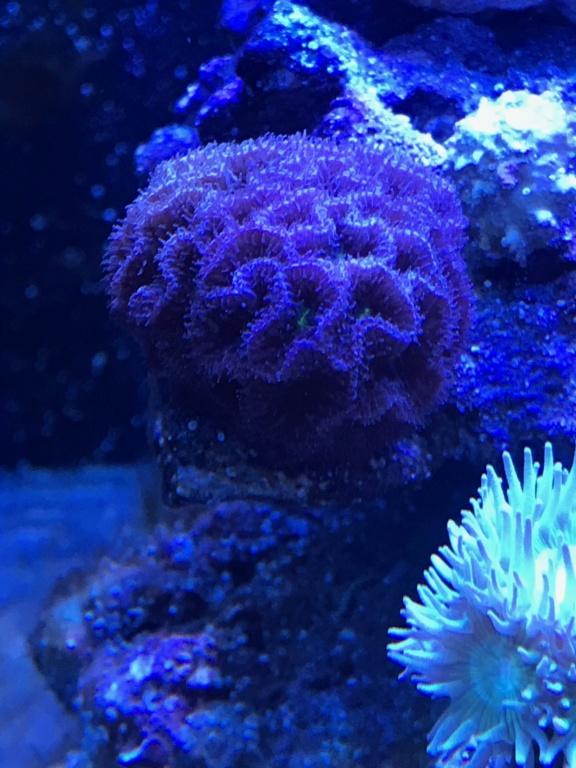 Waterbox Reef 100.3 de Memete Img_8713