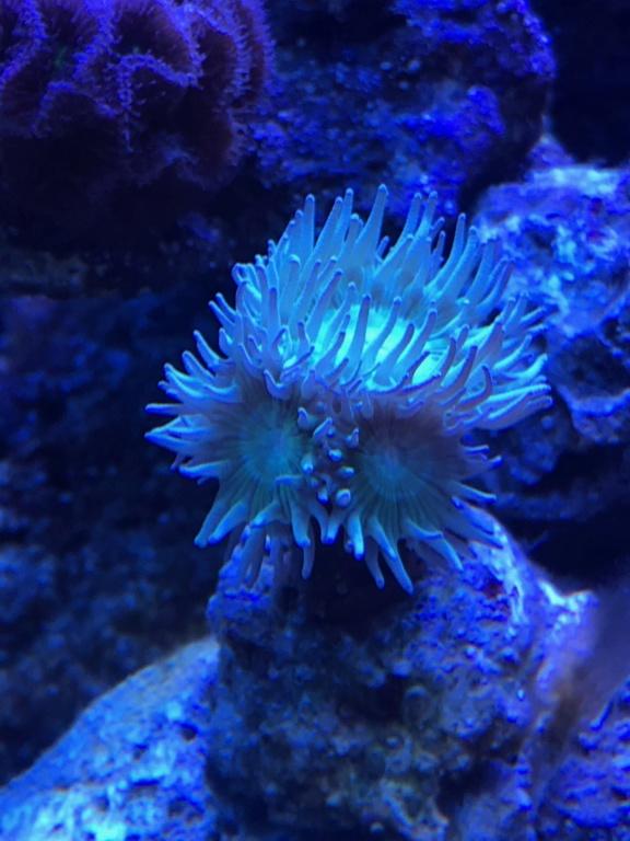 Waterbox Reef 100.3 de Memete Img_8714
