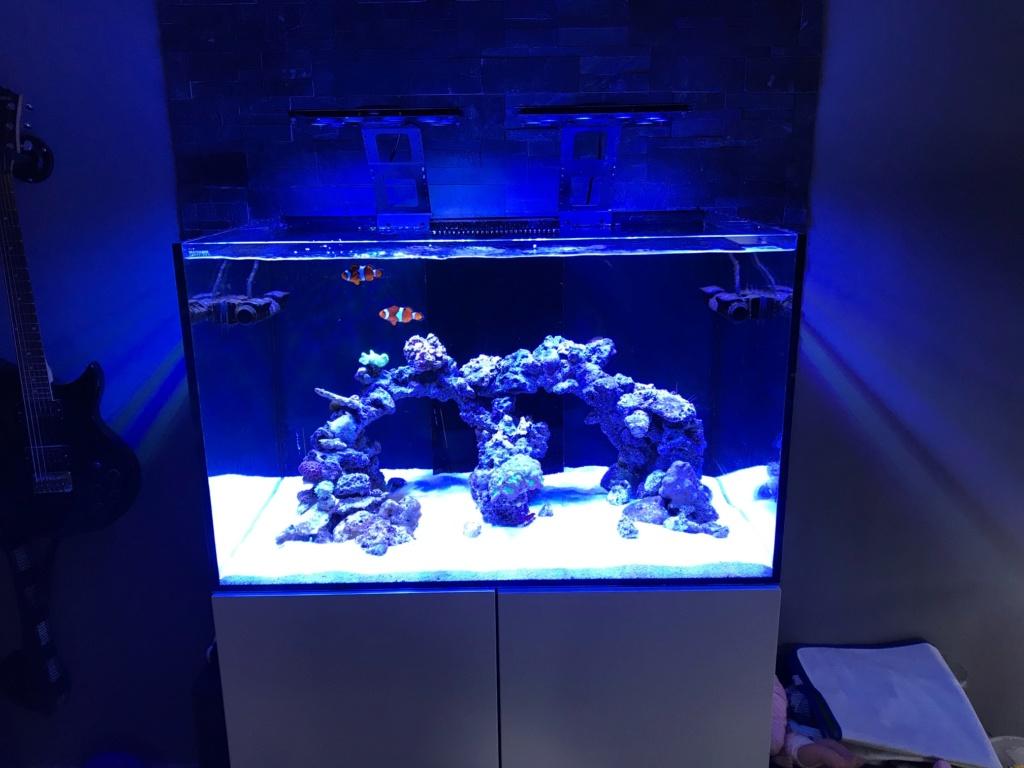 Waterbox Reef 100.3 de Memete Img_8810