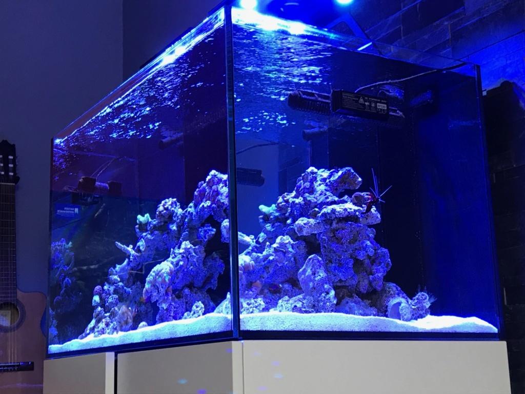 Waterbox Reef 100.3 de Memete Img_8813