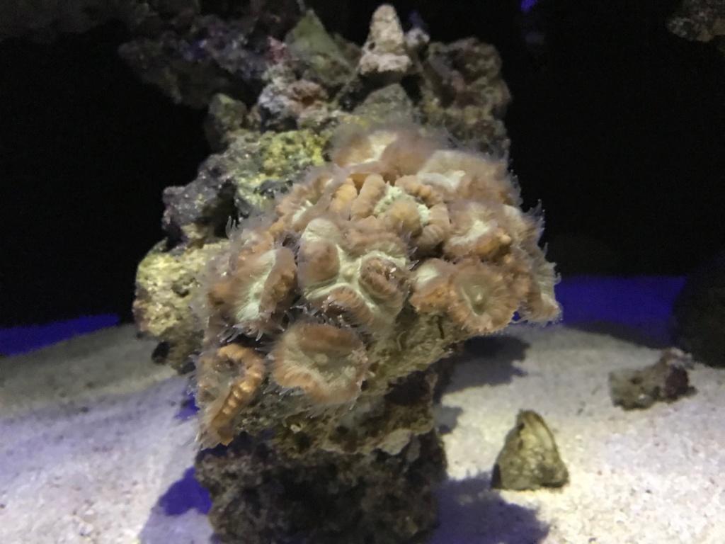 Waterbox Reef 100.3 de Memete Img_8815