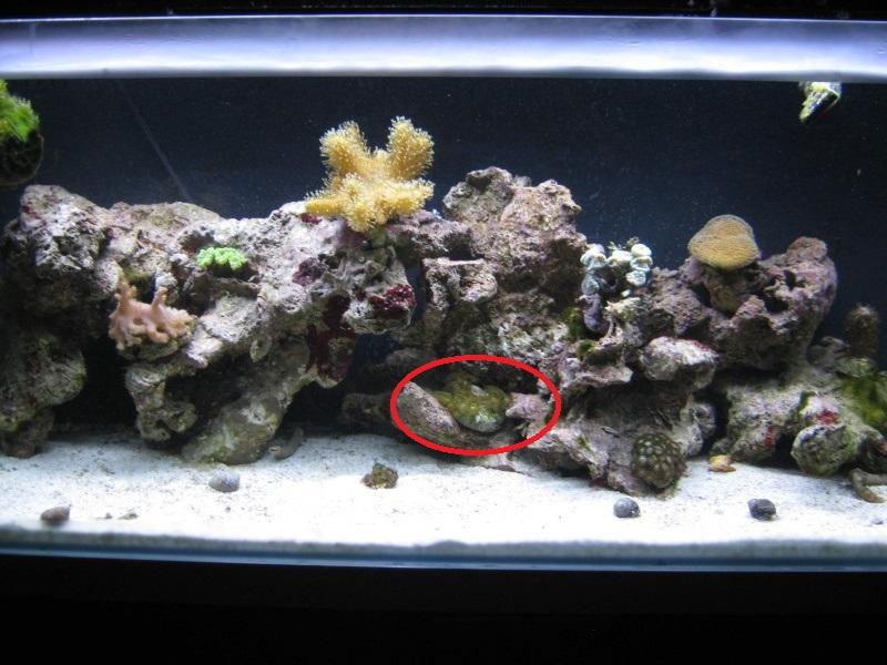 L'aquarium de la tite nouvelle Img_0910