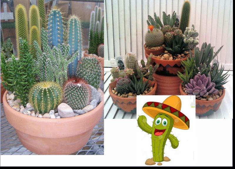 Nega kaktusa Pozadi11