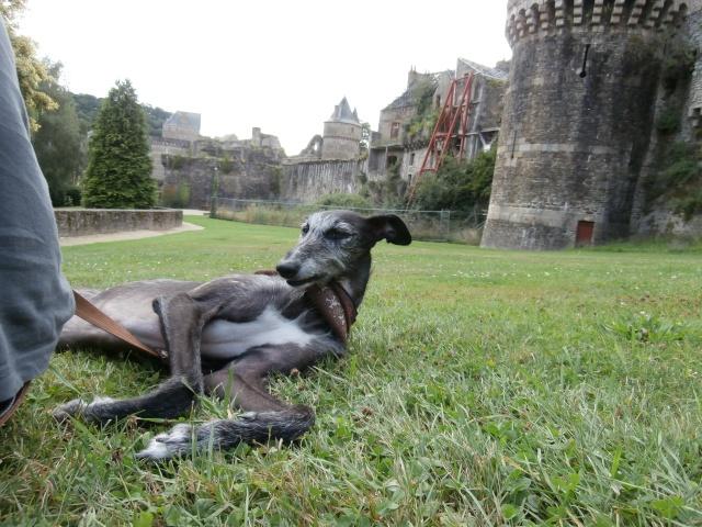 Riberi galgos barbudos  à l'adoption Scooby France  Adopté - Page 10 P8090611