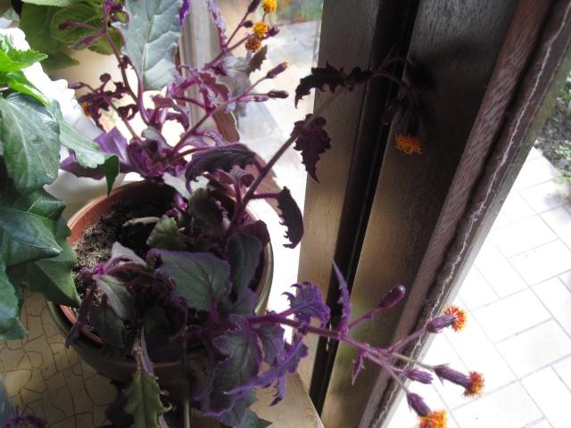 amateurs de cactus et plantes ?  - Page 20 Img_3720