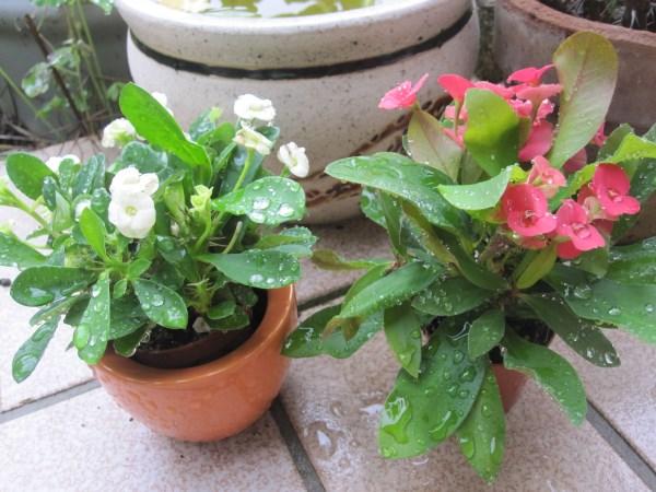 amateurs de cactus et plantes ?  - Page 21 Img_4010