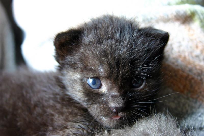 Am, Stram, Gram, 3 chatons sauvés in extremis, Ecole du chat de Roubaix (59) Gram10