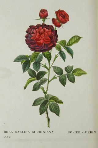 A vendre: livres sur Marie-Antoinette, ses proches et la Révolution - Page 2 D197f710