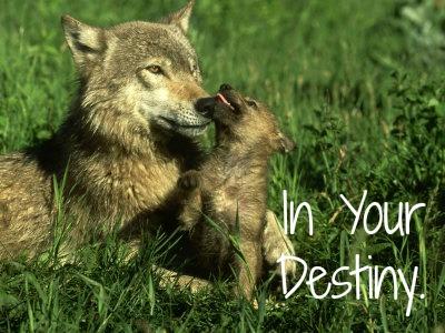 Destiny's Faith- Lion & wolf RPG. Wolf_p13