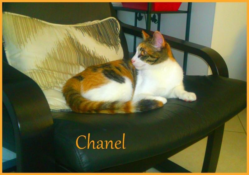 CHANEL (Violette)  - Page 3 Dsc_0118